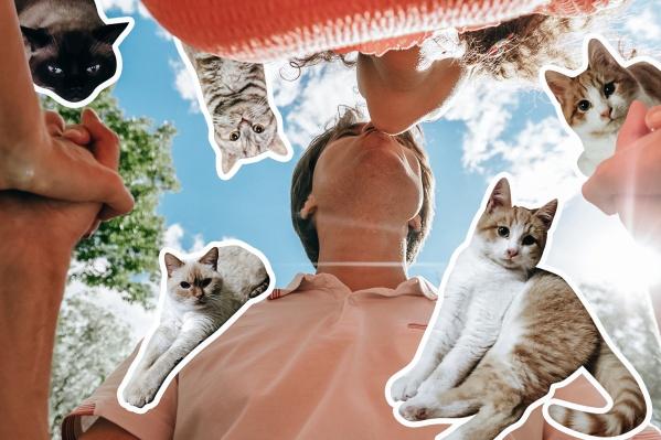 Мужчины и котики — излюбленные герои различных мемов