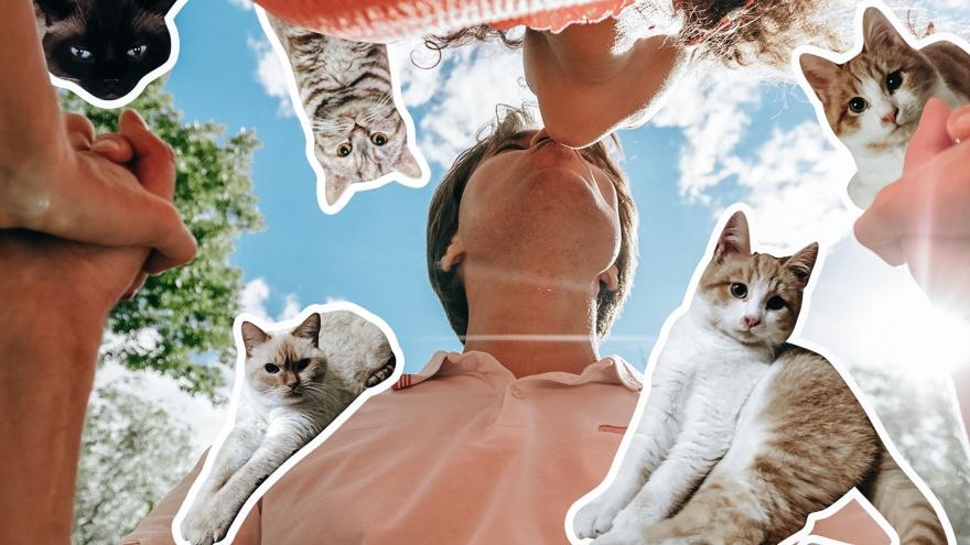 5 причин, почему лучше завести в доме кота, чем мужчину