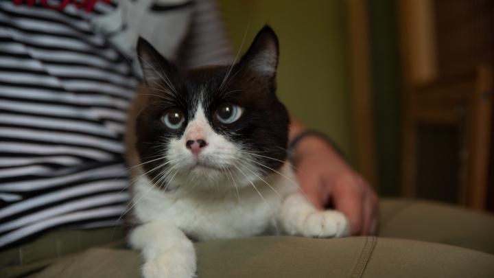 В Новосибирске ищут контент-менеджера для кота со странными глазами