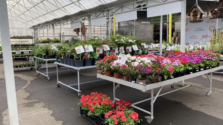 Садовый центр «Плодовое» открылся для покупателей