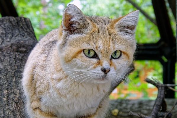 Зоопарки возобновили обмен животными, который останавливался из-за ограничений по коронавирусу
