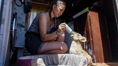 За львёнка, спасённого из багажника автобуса, развернулась борьба. Приютить его готовы Челябинск и Чита