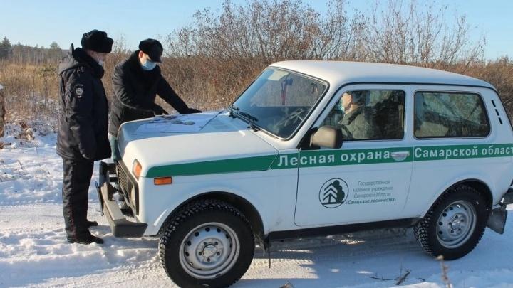 Операция «Елочка»: в Самарской области ловят незаконных лесорубов