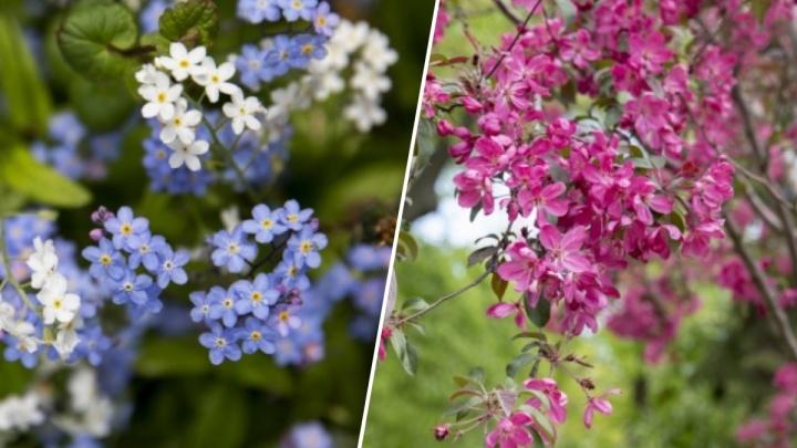 Ярославль расцвёл: фоторепортаж с нежным ароматом весны