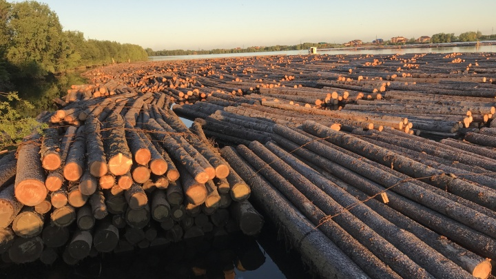 Край доски: работники лесной отрасли Поморья принимают поздравления с профессиональным праздником