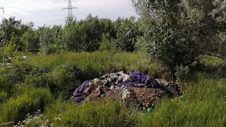 В Ростове неизвестные устроили свалку из туш животных рядом с жилыми домами