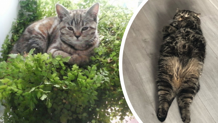 «Всё в порядке, мне удобно»: 20+ котов, которые уютненько устроились в самых нелепых позах