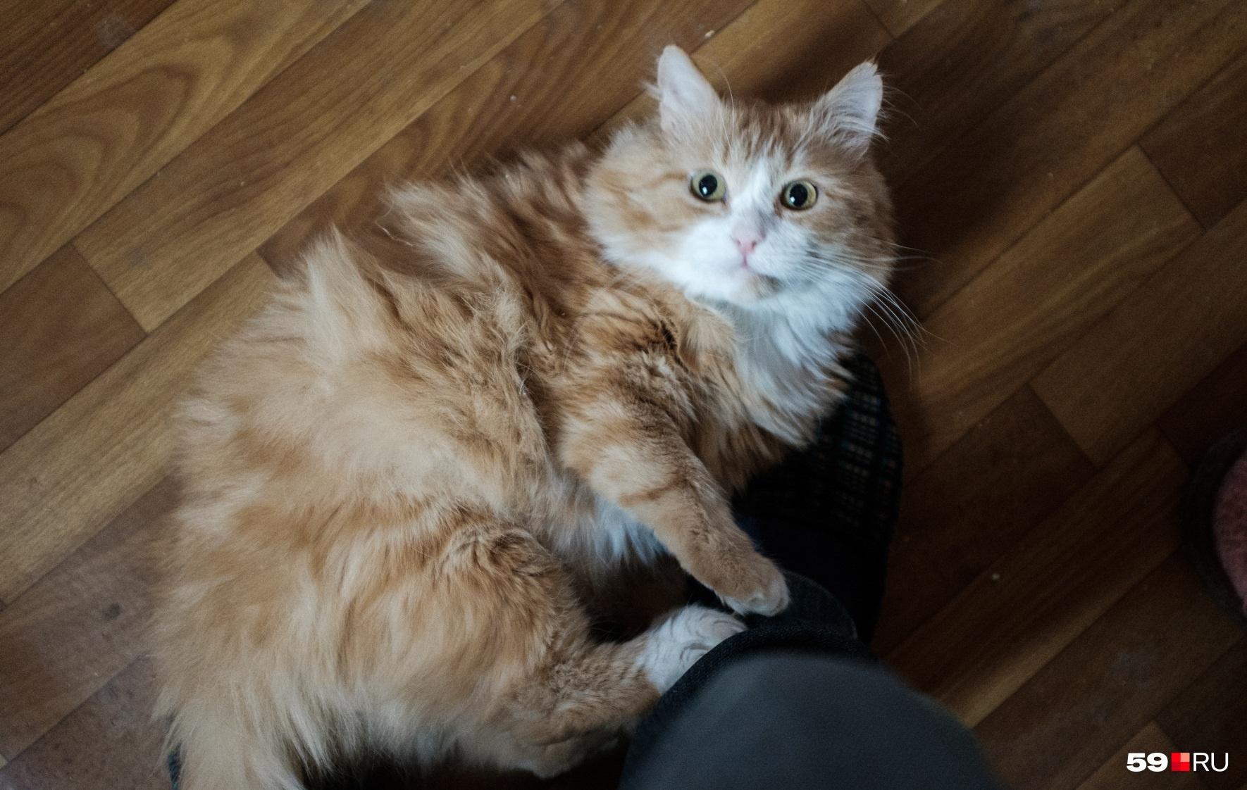 Не водите домашних котеек на улицу — это небезопасно