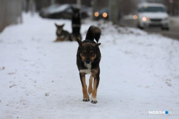 Рядом с трупом видели стаю собак