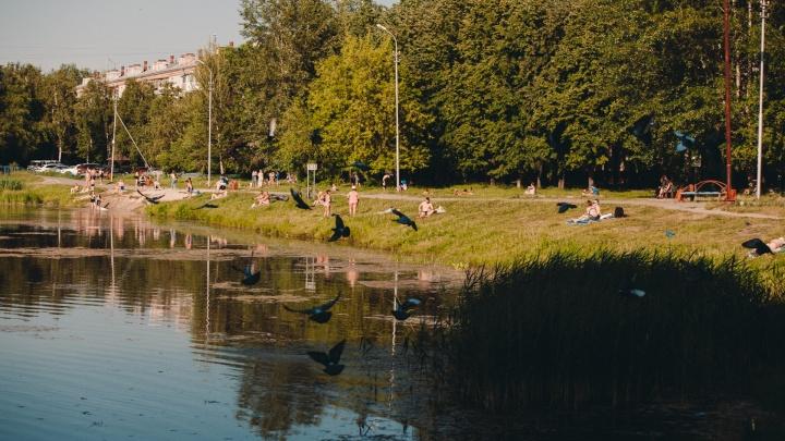 На Утином пруду каждый год тонут люди. Что с ним будет?