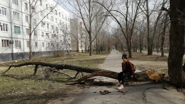 «Ждут летной погоды?»: коммунальщики Волжского уже неделю игнорируют вырванный с корнем ствол дерева
