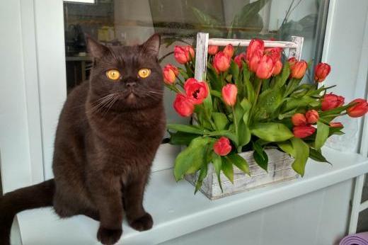 Котики в самоизоляции: ростовчане показали, как переживают пандемию их пушистые любимцы