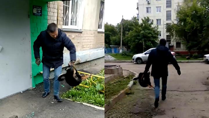 Челябинец убил собаку на глазах у детей