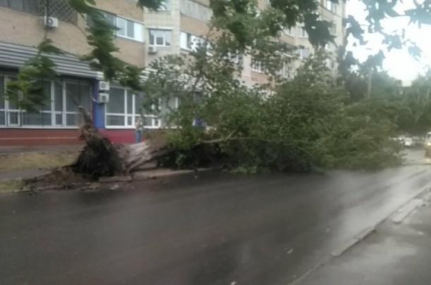 Более 20 авто прижало деревьями: в МЧС рассказали о последствиях ураганного ветра в Самаре