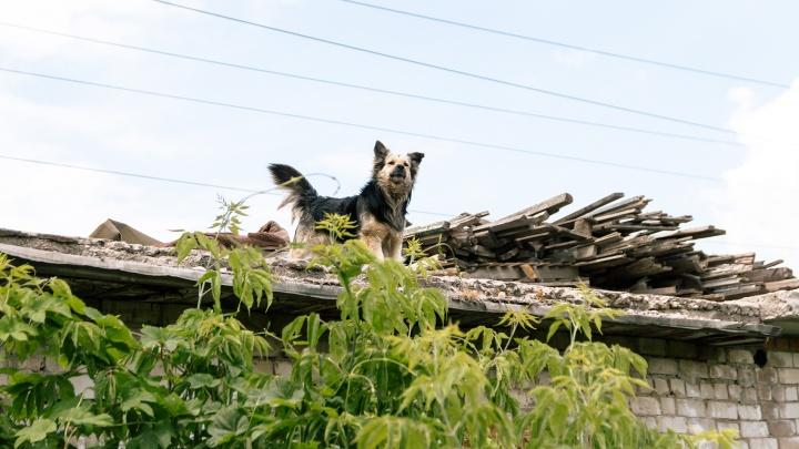 В Самаре не нашли компанию, которая займется отловом бездомных собак