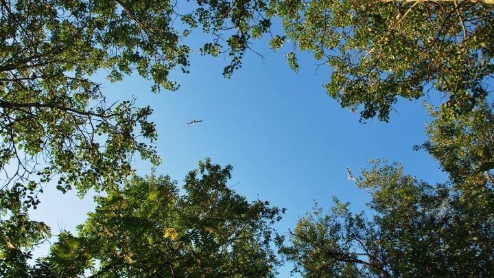Леса вдоль нерестовых рек в Устьянском районе будут охраняться