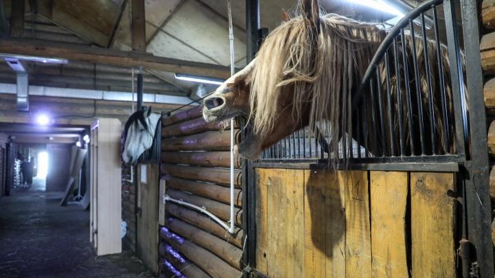 «Собственники не проявляли интереса»: волгоградские общественники предлагают раздать лошадей из «Соснового бора»