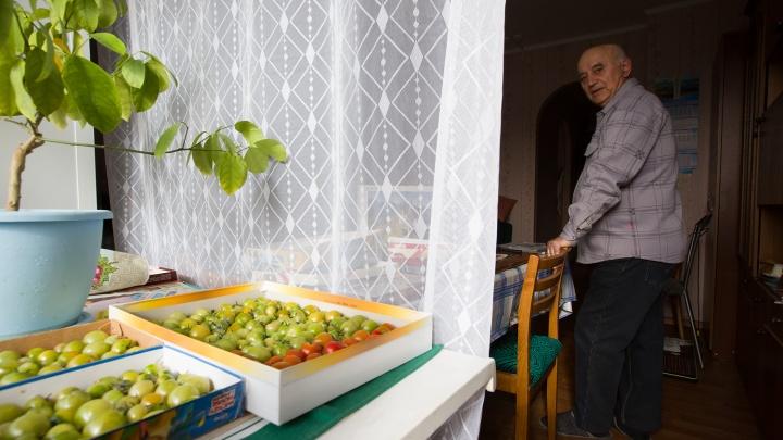 Власти Новосибирской области рекомендовали перевести пожилых сотрудников на удалёнку