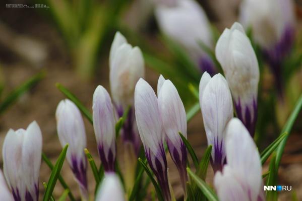 Весна все увереннее вступает в свои права