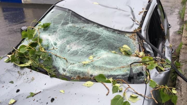 Пермячка отсудила почти 100 тысяч рублей за упавшее на машину дерево