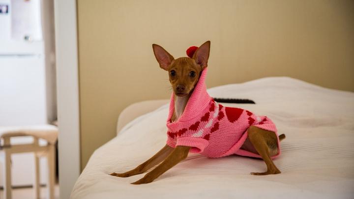 Утепляют собак и кутаются в тёплую одежду сами — аналитики AliExpress показали типичный облик новосибирца