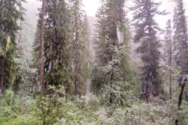 Густая листва и высокая трава под хлопьями снега