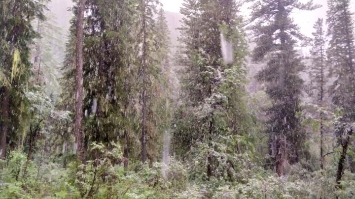 На юге края выпал снег — показываем удивительное видео