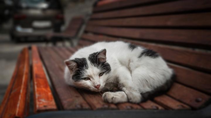 Кузбассовец подарил котёнка возлюбленной и сжёг его на следующий день