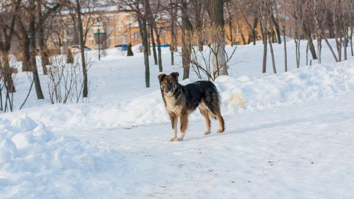Увеличили в 5 раз: в Самарской области отлов одного бездомного животного оценили в 7856 рублей