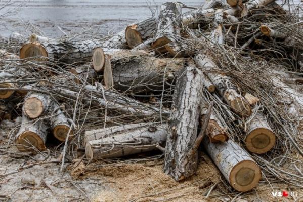 За спил пяти деревьев из бюджета готовы заплатить 73 тысячи рублей