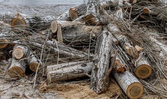 В Волгограде ищут подрядчика на снос пяти деревьев