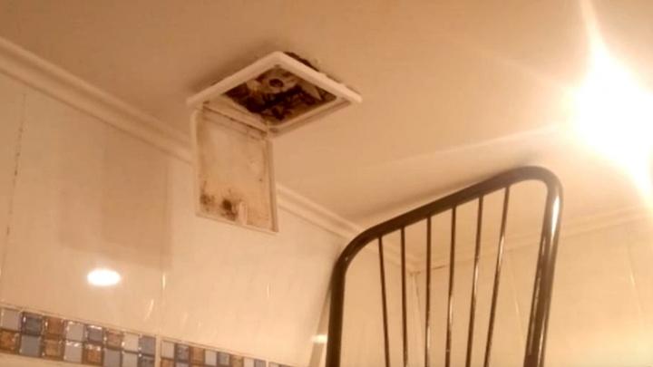 Кошка застряла в потолке ванной — спасатели сняли видео, на котором зверь выглядывает с высоты