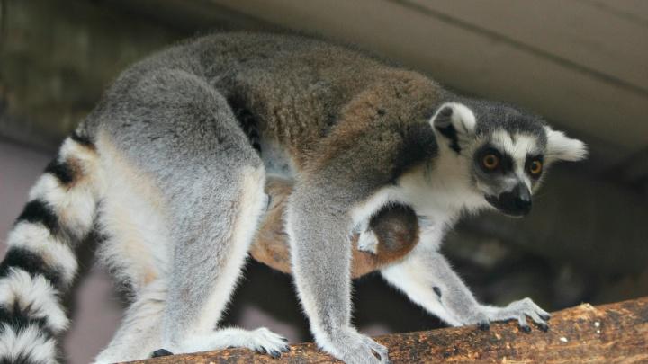 Зоопарки «Лимпопо» и «Мишутка» получат 1,5 млн поддержки из городского бюджета