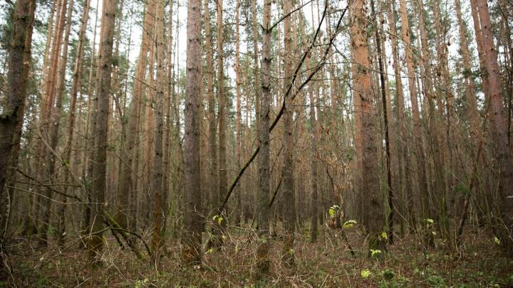 В лесополосе под Ярославлем нашли мёртвым пропавшего Александра Волкова. Первые подробности