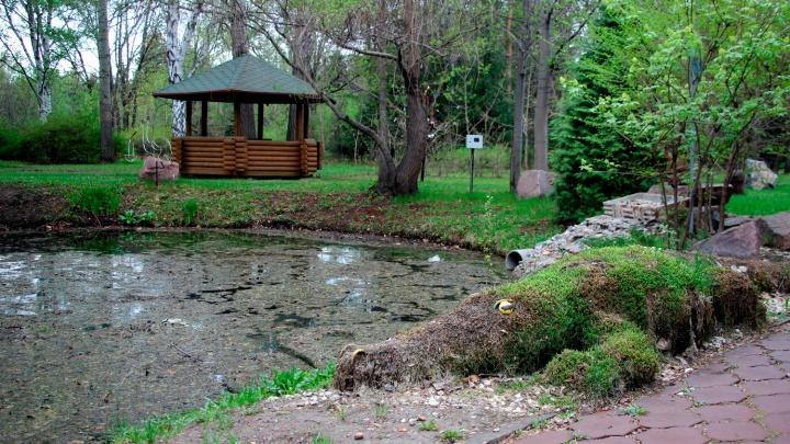 В Минприроды Омской области объяснили, для чего уменьшают площадь дендросада