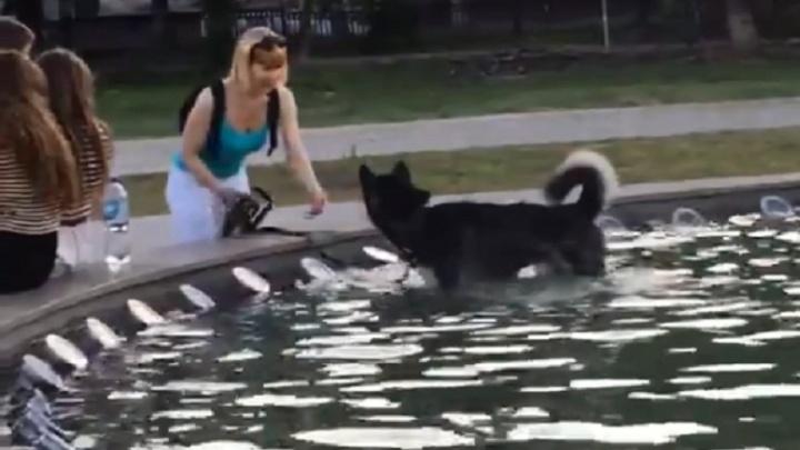 «Надо выписывать протоколы»: волгоградцы превратили «фонтан-убийцу» в ванну для собак