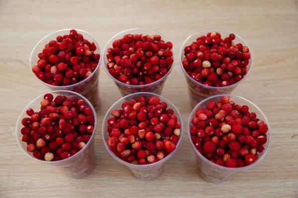 Эти ягоды были собраны тюменским фотографом в лесу около Салаирского тракта. Вы любите землянику?