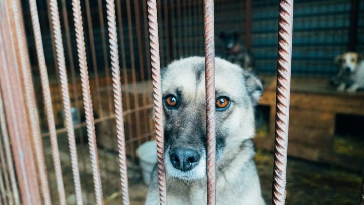 Твое собачье дело: разбираемся, полезна ли идея о создании сети приютов для животных в России