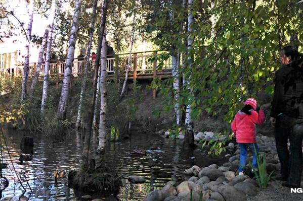 В пруд на Золотодолинской в Академгородке массово побежали лягушки, чтобы отложить икру
