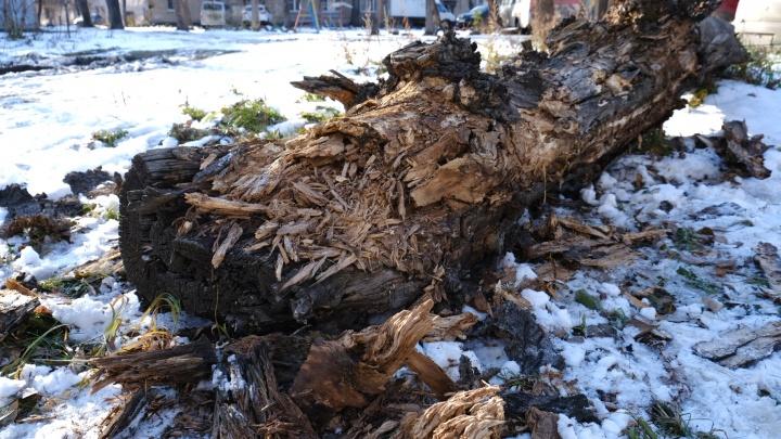 «Сами повезли на пазике в больницу»: челябинка, на дочь которой упало дерево, рассказала о трагедии