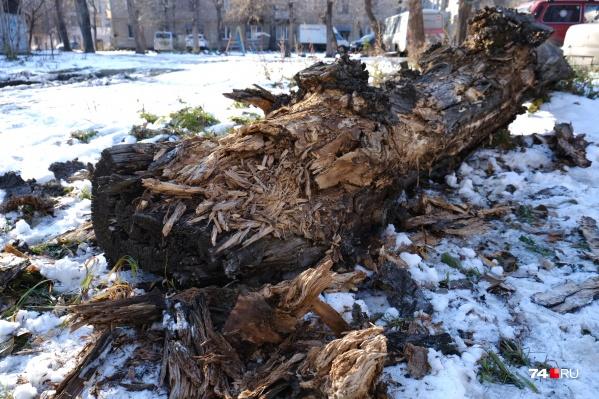 Трухлявое дерево рухнуло на детскую площадку