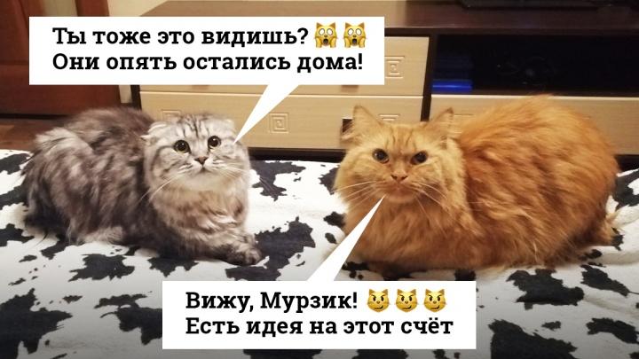 «Эй, ты когда уже на работу пойдешь?»: 20 тюменских котиков, которых достали хозяева на самоизоляции