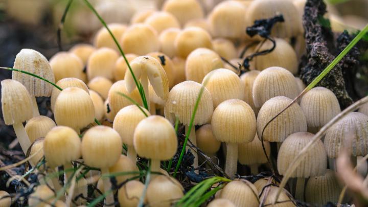 В Самарской области любители грибов заразились смертельно опасным заболеванием