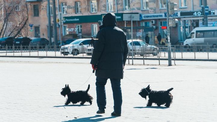 Депутаты предложили штрафовать омичей за лай собак и пение по ночам