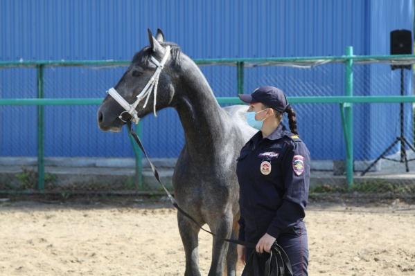 Ежедневно Кемерово патрулируют две конные пары