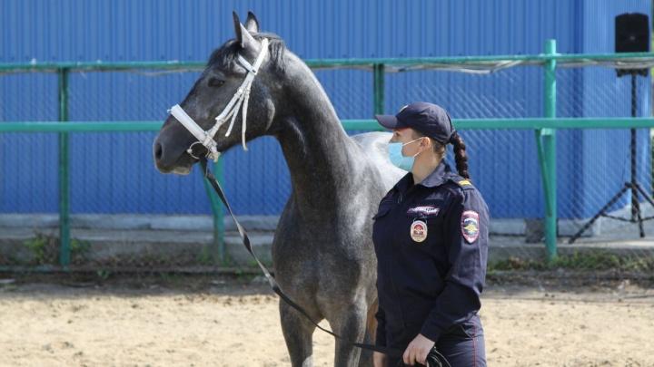 В Кемерово создали первый в регионе взвод конной полиции. Показываем новобранцев