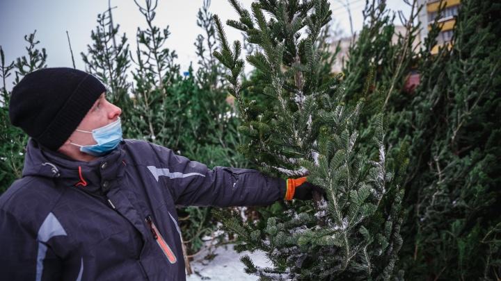 В новогодние праздники в Кузбассе похолодает: синоптики рассказали, чего ждать от погоды