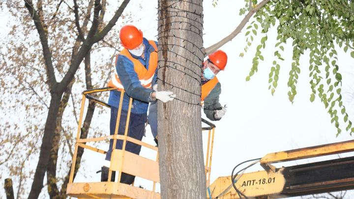 В Самаре начали украшать деревья к Новому году