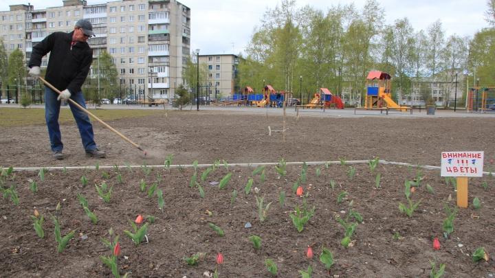 В Архангельске выбирают территории для благоустройства в 2022 году: как и где проголосовать