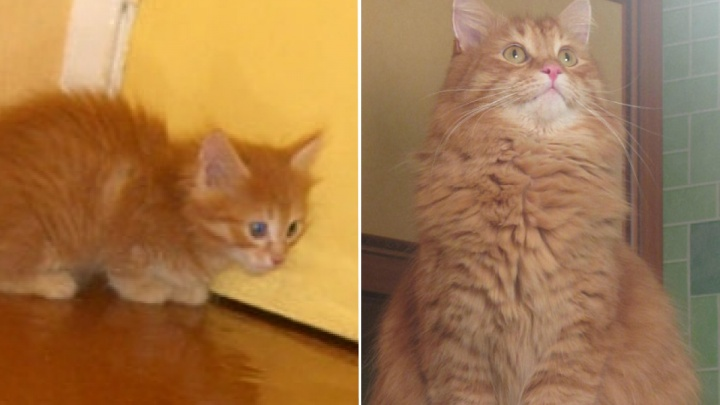 «Любимые бомжики»: 11 бездомных котиков, которые преобразились, обретя семью